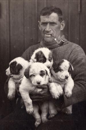 Bild på besättningsmannen Tom Crean och en del av hundarna som följde med på expeditionen