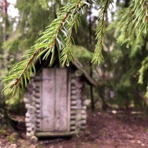 Ett utedass i skogen. I förgrunden en grankvist i solen.