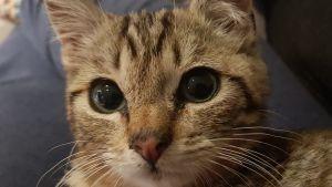 Katten Alva har fått ett nytt hem