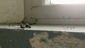 Döda insekter på ett slitet fönsterbräde i ett gammalt vattentorn.