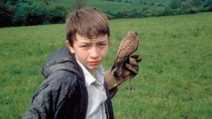 Billy (David Bradley) ja hänen haukkansa Kes. Kuva elokuvasta Poika ja haukka.
