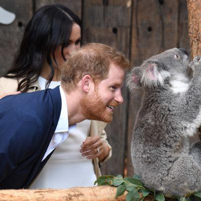Det brittiska hertigparet besöker zoo i Australien