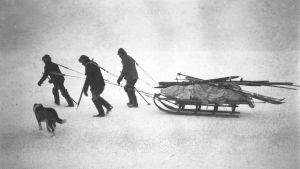 Ryhmä talvikalastajia Suursaaren edustalla vuonna 1924.