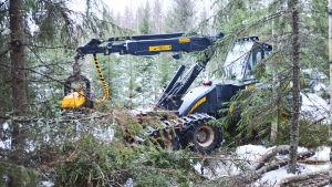 En traktorliknande skogsmaskin står inne i en skog.