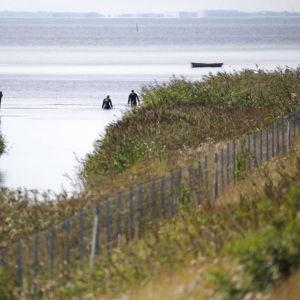 Danska Beredskapsstyrelsen assisterar polisen som söker efter kroppsdelar i Kalvebod Fælled den 23 augusti nära stället där en del av journalisten Kim Walls kropp hittades den 21 augusti 2017.