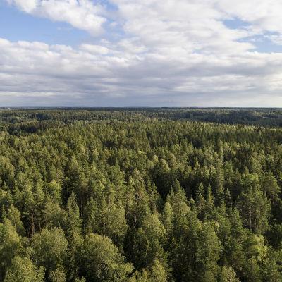 Skog fotograferad ovanifrån i Sibbo storskogs nationalpark.