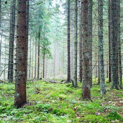 Träd i skogen.