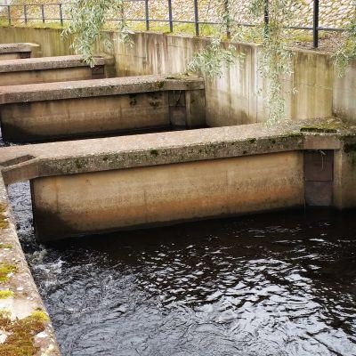 Merikosken kalatien alaosassa virtausta on voimistettu betonisillä väliseinillä, joiden taakse muodostuu suvantopaikkoja. Oulujoen kalatien alaosaa kesällä 2016.