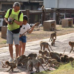 Liksom många Lopburibor har Thitinan Techawongtham alltid en slangbössa nära till hands. En man och en flicka ser neråt på en hel del apor som går runt dem.
