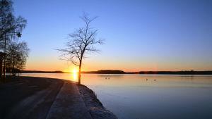 Solen går ner bakom en ensamt träd på en udde.