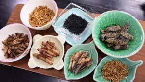 Olika ätbara insekter på fat i ett kök.