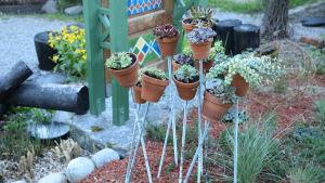 En installation i trädgården med taklök och fetknopp i terrakottakrukor