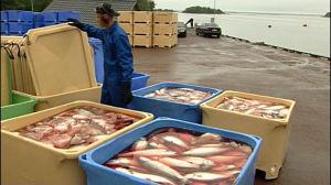 Fiskhandel på Åland