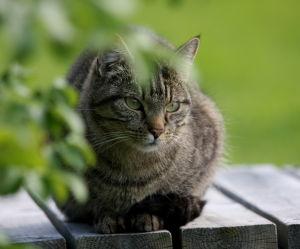 Katten Kiara