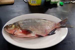 Braxen är en god fisk, fast benig