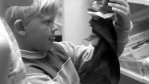 Pojken med handdocka 1968