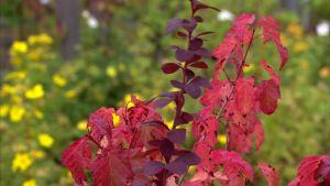 Höstens färger är oslagbara.