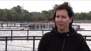 Pia Lindberg-Lumme odlar lax i Brändö, Åland.
