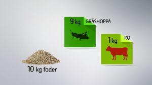 Miljövänliga proteiner