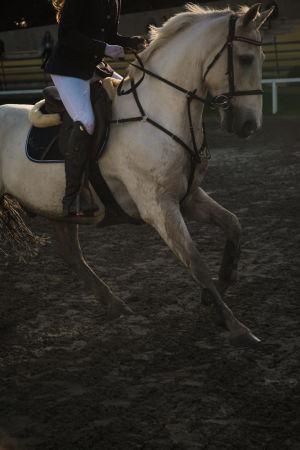 Ratsukko, valkoinen hevonen