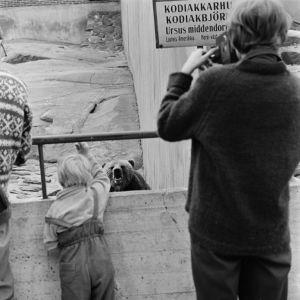 Kodiakkarhu karhulinnassa 1964.