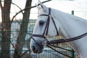 Valkoisen hevosen pää