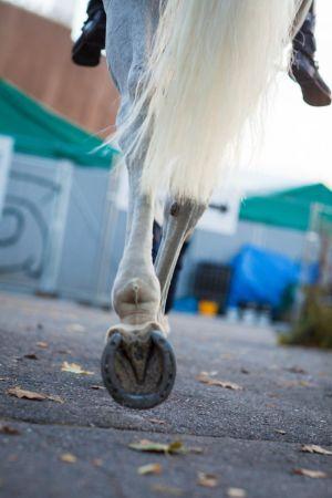 valkoisen hevosen takakavio