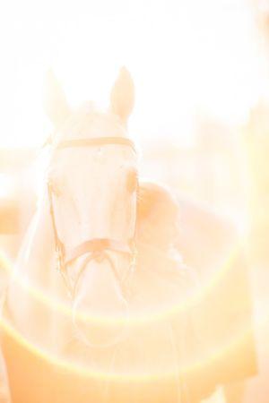 Valkoinen hevonen vastavalossa
