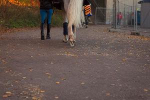 nainen ja valkoinen hevonen takaa päin