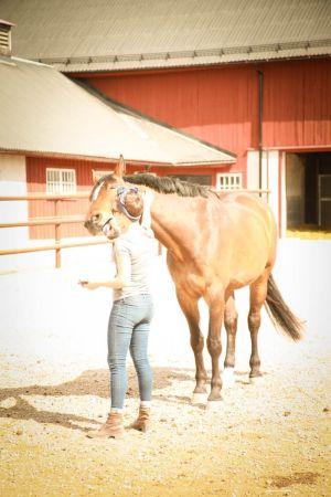 nainen rapsuttaa hevosen kaulaa
