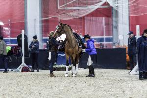Hevonen ja ratsastaja menossa radalle, hoitaja avustaa