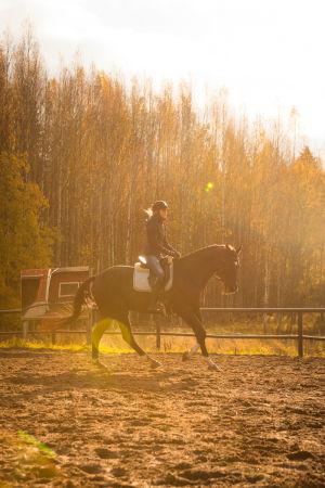 ratsukko kentällä vastavalossa