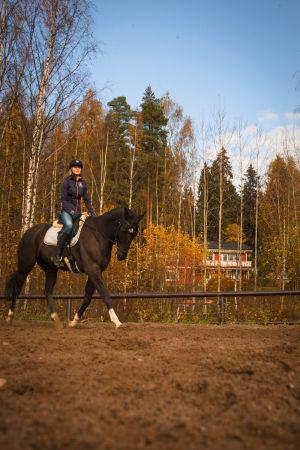 ratsukko kentällä