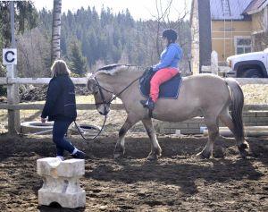 ratsukkoa talutetaan kentällä