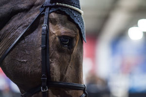 ruskean hevosen pää