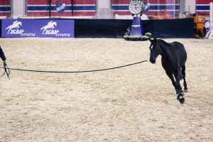 hevosta juoksutetaan liinassa