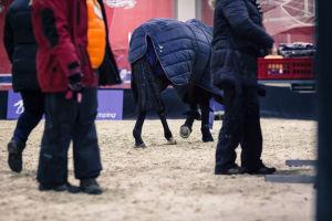 ihmisiä ja hevonen kentällä