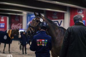 hevonen tarkastetaan ennen kilpailua