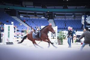 karannut hevonen ilman ratsastajaa esteratsastusradalla