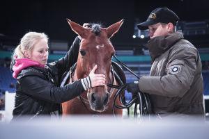 Kaksi ihmistä pitää kiinni hevosesta