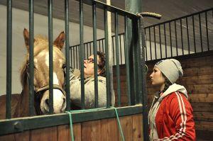 eläinlääkäri tutkii hevosta