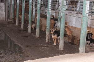 koiria häkissä koiratarhalla Romaniassa