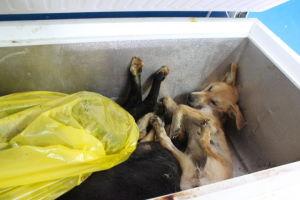 kuolleita koiria pakastimessa