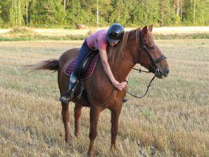 Ratsastaja halaa suomenhevosta