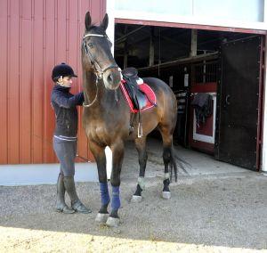 ratsastaja kiristää hevosen satulavyötä