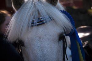 Hevosen otsa