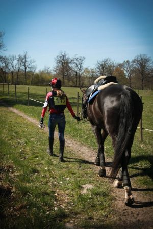 Ratsastaja taluttaa hevosta nurmikentällä