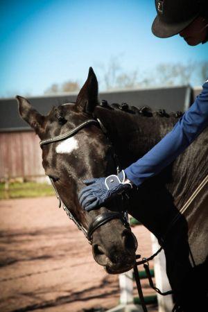 Ratsastaja silittää hevosen päätä