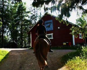 Hevonen ja ratsastaja menossa ratsastamassa tallille