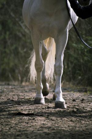Hevosen jalat hiekalla